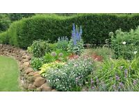 GREEN Garden Design & Maintenance - Full or part garden design and garden maintenance services.