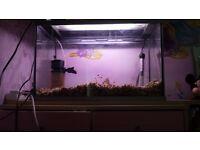 2ft tetra fish tank