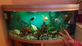 Aquarium fish thank 300l