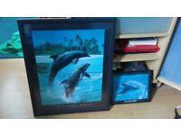 Dolphin photos in frames