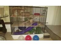 3 Roborovski Hamsters & Large Cage