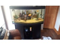 Jewel Vision 260 Bowfronted Aquarium