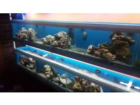 live rock fiji grade A for marine fish tank & aquariums