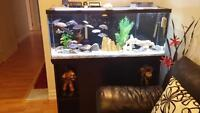 55 gallon with fish and cabinet