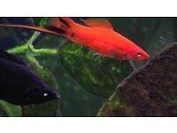Tropical Fish Job Lot
