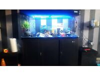 4FT FISH TANK 225 litres AND CABINET 3 MONTHS OLD