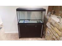 Very large fluval roma fish tank