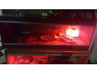 4Ft Vivarium, bark, hide, heat lamp + shield. With a fire corn snake