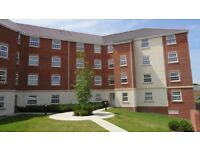 Two Bedroom Apartment To Let In Hamilton