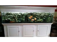 Fish Tank 8ft. 3 Drawer