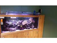Marine tank 5ft x 2 ft, fish, corals, rock etc
