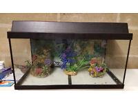 Complete set fish tank aquarium with accessories