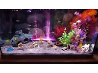 jewels fish tank
