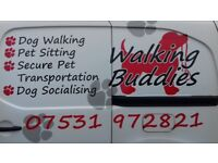 Walking Buddies dog walking service