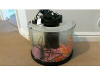 semicircle fish tank with aquaponics filter low maintenance