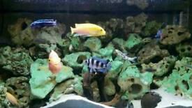 Custom Fish Tank Complete Setup