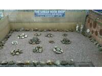 The Urban Rock Shop garden stone / rocks Ad 1