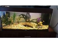 compleat tropical fish tank