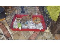 RABBIT FOR FREE IN GREENFORD