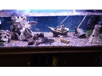 4ft tank, stand and malawi set up