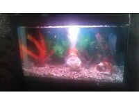 2 and a half ..ft fish tank