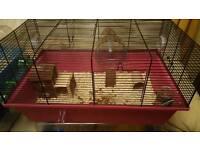 Baby dwarf hamster