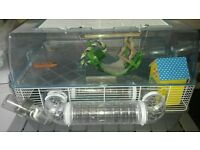 Hamster with cage and toys