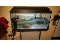 Turtle tank and stand