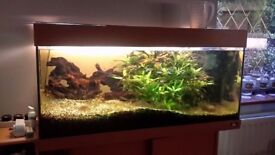 FULLY QUIPED AQUARIUM