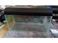 Large fish tank aquarium