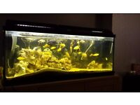 Cichlids for sale and tank