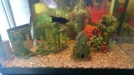 Tropical fish tank kit and fish