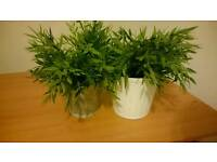 PENDING COLLECTION collect Linthouse TUESDAY 9am or 1pm Two Ikea plastic ferns in nice pots