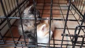 2 kittens left male femalr