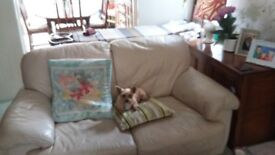 Cream leather sofa