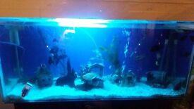 280 litter full fish tank set up