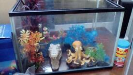 Fish tank and accessories (can sell separately)
