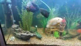 Aquarium fish please read add