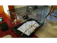 Large bird cage with tray