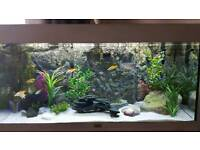 180ltr one of a kind fish tank