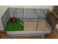 Guinea pigs x2 with cage and accessories
