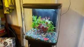 Fishtank aqurium fish tank aqua tropical
