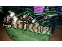 2x gerbil cages and boys and females