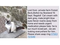 Lost or stolen Ragdoll Cat Bolton by Bowland