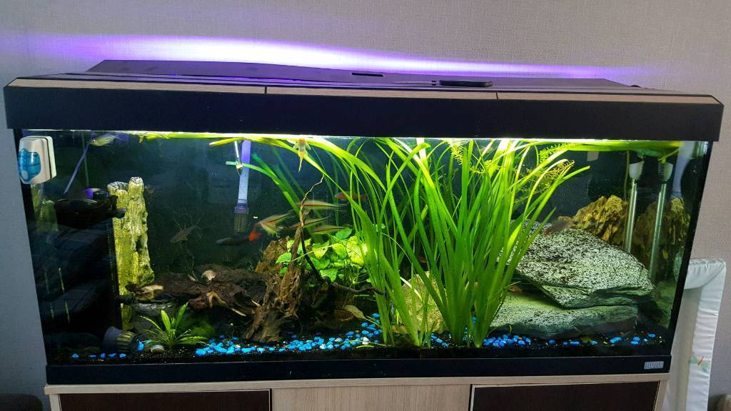 Fluval tank full set up with fish