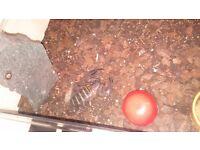 Rock scorpion for sale need gone 40