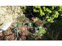 Allsorted plastic plant pots