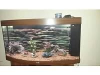 Juwel 260 litre tropical fish tank with double door cabinet