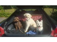 Fully INSURED Dog Walker, HOME boarding, Doggy Day Care, Training