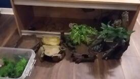 Large vivarium and all supplies